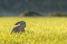 Free Rabbit In Grass Stock Image - 82980041