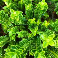 Free Green Leaves Royalty Free Stock Photo - 82980095
