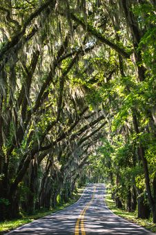Free Road Passing Through Forest Stock Photo - 82980170