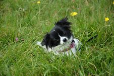 Free Small Dog In Green Grass Royalty Free Stock Photo - 82980335