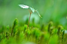 Free Green Leaf Plant Beside Green Leaf Stock Photos - 82980473