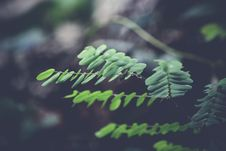 Free Green Ferns In Forest Stock Photo - 82980630
