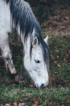 Free Horse Grazing In Field Stock Image - 82980651