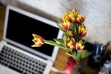 Free Tulips On Desktop Royalty Free Stock Photo - 82980655