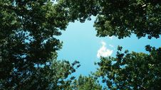 Free Low View Of Green Leaf Trees And Blue Sky During Daytime Royalty Free Stock Images - 82981189