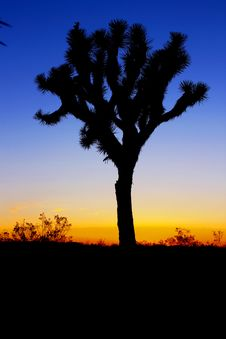 Free Silhouette Of Tree During Sunset Royalty Free Stock Images - 82981619