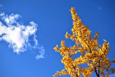 Free Autumn Tree And Cloudscape Royalty Free Stock Photos - 82981868