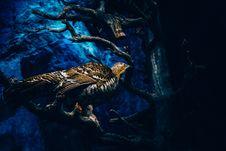 Free Bird In Tree Stock Photography - 82982792