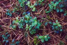 Free Photo Of Leafy Small Plant Royalty Free Stock Photography - 82982867