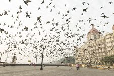 Free Black Birds Flying Near Brown Concrete Building Stock Photos - 82983123
