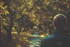 Free Man On Sunny Forest Trail Royalty Free Stock Images - 82983269