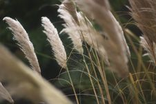 Free Grasses In Sunlight Stock Images - 82983364