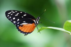 Free Close-up Of Butterfly On Plant Stock Photos - 82983453