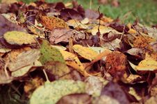 Free Fall Leaves On Grass Stock Images - 82983524