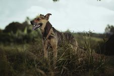 Free Black And Tan Short-coated Medium-sized Dog On Green Grass Field Royalty Free Stock Photo - 82984285