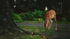 Free Young Deer In Yard Stock Photos - 82984333