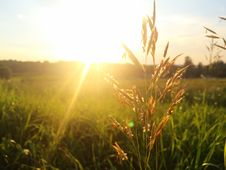 Free Blade Of Grass In Field At Sunset Stock Photos - 82984453