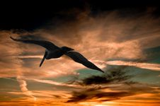 Free Pelican Flying At Sunset Stock Photo - 82984520