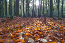 Free Orange Dry Leaves On The Ground Inside Forest Under Clear Sky Stock Photos - 82984743