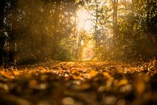 Free Sunlit Path Through Forest Royalty Free Stock Images - 82984919