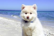 Free Portrait Of Dog Standing On Beach Royalty Free Stock Images - 82984939