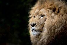 Free Lion Head Stock Photo - 82985070