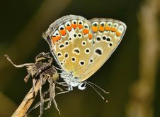 Free Butterfly On Branch Stock Photos - 82985233