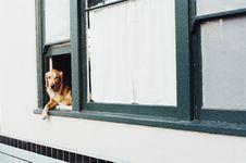 Free Dog Sitting On Window Stock Images - 82985264
