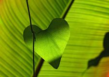 Free Green Heart Shape Leaf Royalty Free Stock Image - 82985286