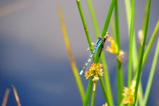 Free Dragonfly On Blade Of Grass Stock Photo - 82985400