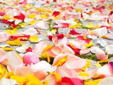 Free Rose Petals On Garden Stones Stock Image - 82985451