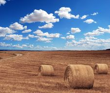 Free Brown Grass Under Clear Blue Sky Under During Time Royalty Free Stock Photos - 82986058