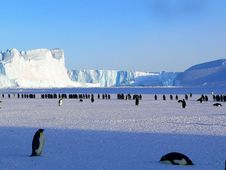 Free Penguins In Antarctica Stock Photography - 82986772