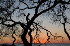 Free Tree Silhouette At Sunset Stock Photos - 82986923
