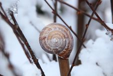 Free Snail Shell On Brown Tree Branch Stock Image - 82986931