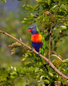 Free Blue Orange And Green Parrot Resting On Brown Branch Stock Photos - 82987533