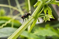 Free Black Fly On Green Leafy Plant Stock Photography - 82987562
