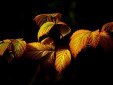 Free Autumn Leaves Royalty Free Stock Photos - 82987598