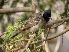 Free Brown Black Small Beak Bird On Brown Tree Branch During Daytime Stock Image - 82987641