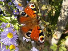 Free Orange White And Black Butterfly Perched On Flower Royalty Free Stock Images - 82987819