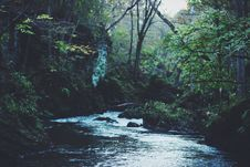 Free River Running Through Dense Forest Stock Photography - 82987842