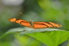 Free Brown Butterfly On Leaf In Macro Photography Stock Images - 82987984