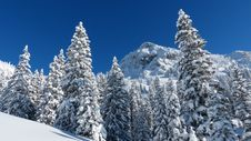 Free Mountain Forest In Winter Stock Images - 82988124