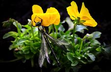 Free Dragonfly On Yellow Flowers Stock Images - 82988194