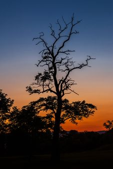 Free Silhouettes Of Trees At Sunset Royalty Free Stock Photos - 82988298