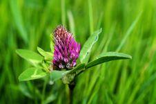 Free Purple Petal Flower On Green Grass Royalty Free Stock Photo - 82988375