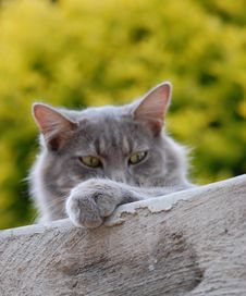 Free Cat Looking Over A Wall Stock Photography - 82988482