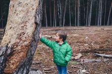 Free Boy Leaning Against Tree Trunk Royalty Free Stock Images - 82988529