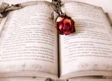 Free Rose On Open Book Stock Images - 82988614