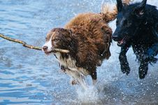 Free Brown And Grey Long Coat Dog With Black Short Coat Dog Stock Photography - 82988732